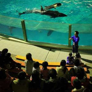 鴨川シーワールドホテルの夜の水族館探検