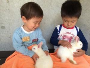 赤ちゃんウサギを抱っこさせてもらいました(#^^#)