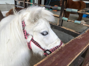 箕面観光ホテルの馬