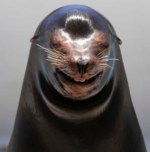 鴨川シーワールドの笑うアシカ