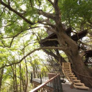 リゾナーレ熱海の森の空中基地2