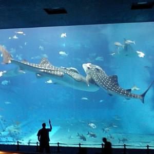 フクギテラス周辺の美ら海水族館