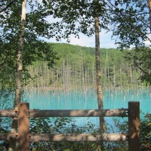 いちいの宿から行ける美瑛の青い池