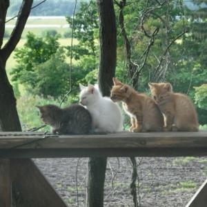 いちいの宿の子猫たち