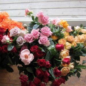 いちいの宿のバラ