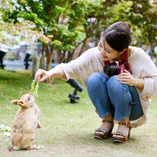 南風楼のウサギ