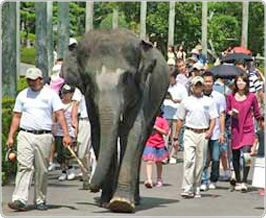 シェラトングランデの動物園