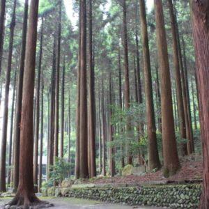 霧島ホテルの百年杉庭園